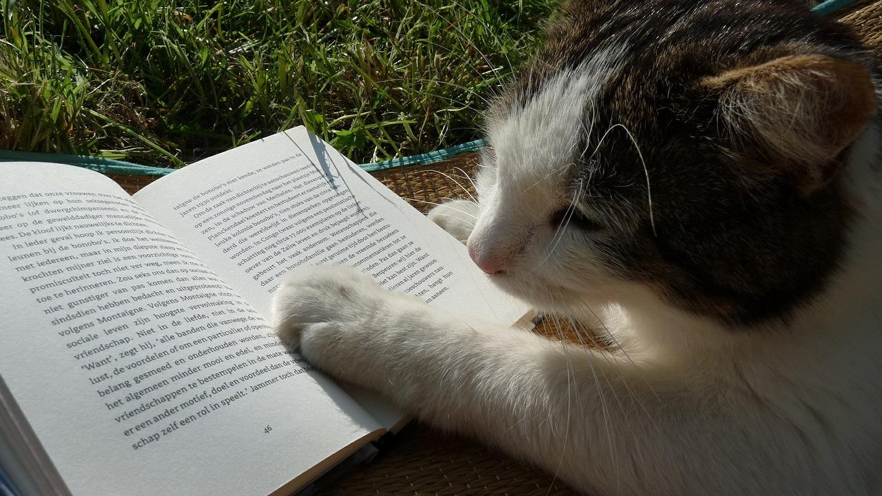 In dieser Artikelreihe gebe ich Ihnen einen Einblick in die Leseforschung. Im Bild: Eine Katze und ein Buch.